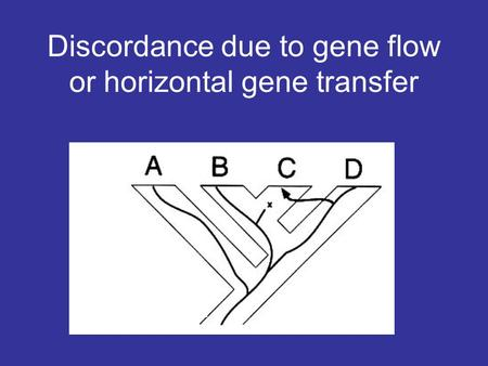 Discordance due to gene flow or horizontal gene transfer.