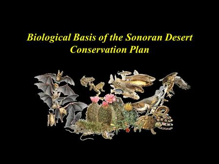 Biological Basis of the Sonoran Desert Conservation Plan.