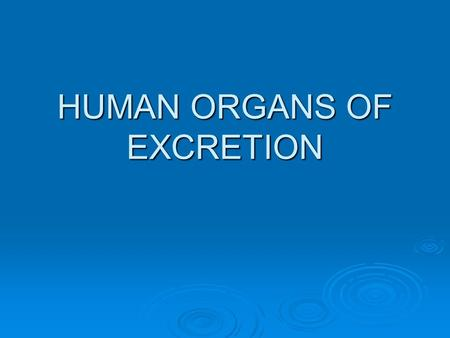 HUMAN ORGANS OF EXCRETION. LUNGS  Excrete carbon dioxide and water  These are the wastes of cellular respiration.