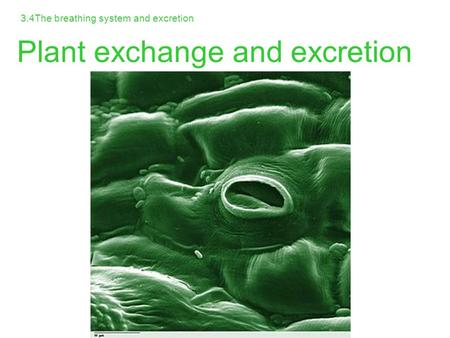 3.4The breathing system and excretion Plant exchange and excretion.