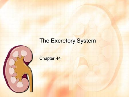 The Excretory System Chapter 44. What you need to know! Different waste products, which animal groups produce each, and why. The components of a nephron,