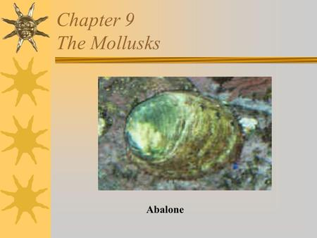 Chapter 9 The Mollusks Abalone. Mollusks  Soft bodied  Include the shipworm, snail, clam, mussel, oyster, scallop, abalone, squid, octopus, cuttlefish,
