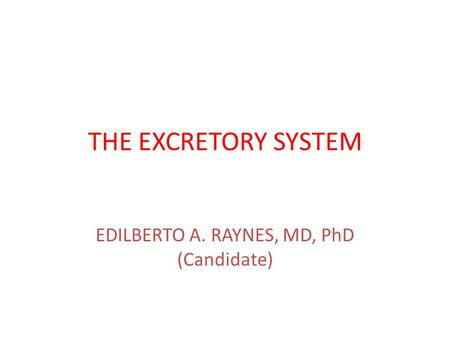 THE EXCRETORY SYSTEM EDILBERTO A. RAYNES, MD, PhD (Candidate)