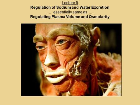 Lecture 5 Regulation of Sodium and Water Excretion ….. essentially same as….. Regulating Plasma Volume and Osmolarity.