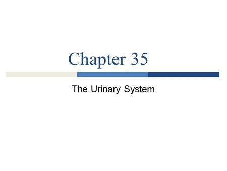 Chapter 35 The Urinary System.