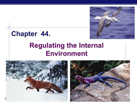AP Biology 2005-2006 Regulating the Internal Environment Chapter 44.