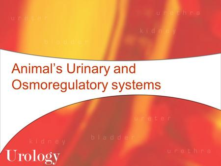 Animal's Urinary and Osmoregulatory systems. Paramecium Paramecium live in freshwater and have a problem of water being transported into them because.