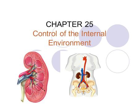 CHAPTER 25 Control of the Internal Environment. internal homeostatic mechanisms  Thermoregulation maintains the body temperature within a tolerable range.