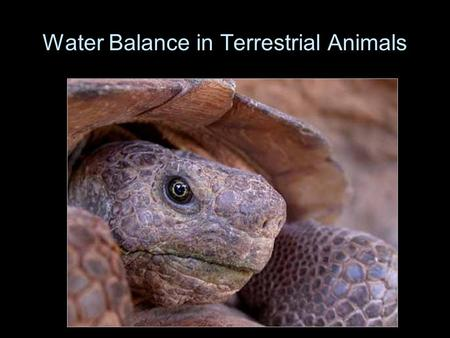 Water Balance in Terrestrial Animals. Recurring themes in physiological ecology  Economy: balancing gains and losses  water, heat, and energy  Effects.