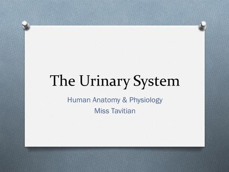 The Urinary System Human Anatomy & Physiology Miss Tavitian.