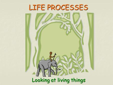 LIFE PROCESSES LIFE PROCESSESLooking at living things.