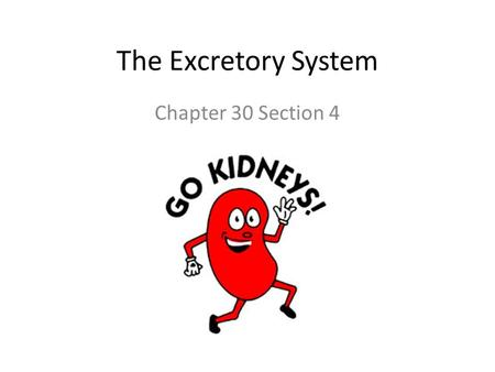 The Excretory System Chapter 30 Section 4. What is excretion and why do we do it? Excretion is the removal of chemical waste product from the body We.