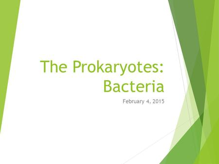 The Prokaryotes: Bacteria February 4, 2015. The Prokaryotes.