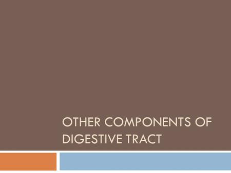 OTHER COMPONENTS OF DIGESTIVE TRACT. Passage rate  How fast ingesta passes through the rumen  Physical form of feed ingredients  Rumination  Feeding.