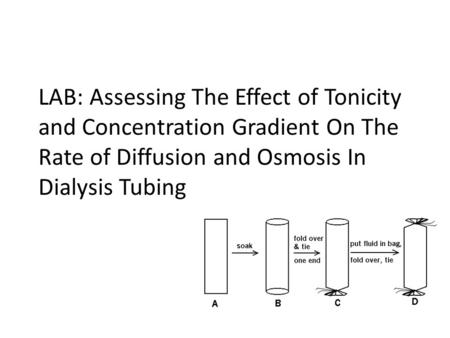 LAB: Assessing The Effect of Tonicity and Concentration Gradient On The Rate of Diffusion and Osmosis In Dialysis Tubing.