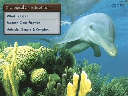 What is Life? What is Life? Modern Classification Modern Classification Animals: Simple & Complex Animals: Simple & Complex.