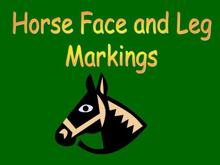 OBJECTIVES Student will be able to discuss the purpose of leg and facial markings Student will be able to identify and describe four horse facial markings.