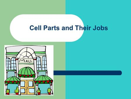 Cell Parts and Their Jobs