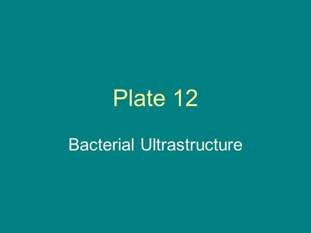 Bacterial Ultrastructure