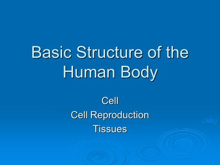 Basic Structure of the Human Body