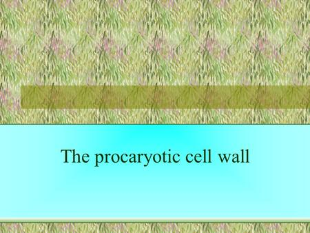 The procaryotic cell wall. Cytoplasm Oxidative phosphorylation occurs at cell membrane (since there are no mitochondria). Cell membrane The cell wall.