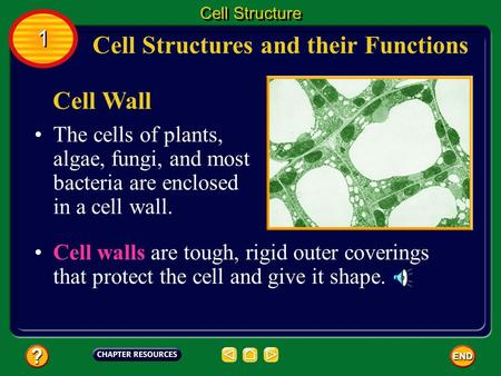 Cell Structures and their Functions