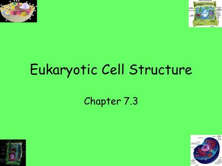Eukaryotic Cell Structure Chapter 7.3. Cellular boundaries Plasma Membrane/Cell Membrane –Fxn-acts as a selectively permeable membrane.