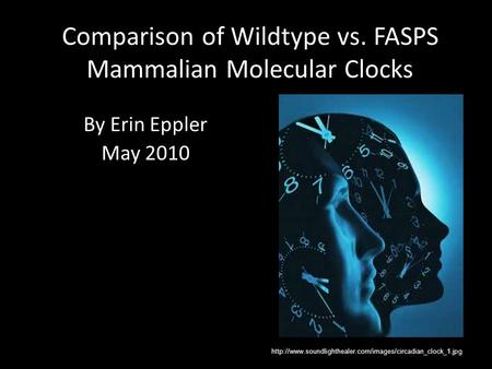 Comparison of Wildtype vs. FASPS Mammalian Molecular Clocks By Erin Eppler May 2010