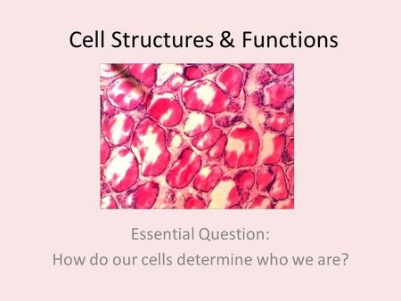 Cell Structures & Functions Essential Question: How do our cells determine who we are?