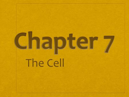 Chapter 7 The Cell.