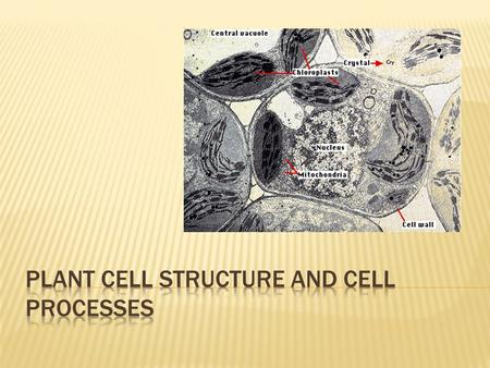  1: Explain the structures of plant cells and important cell processes.  a. Describe the structures of a typical plant cell and their functions.  b.