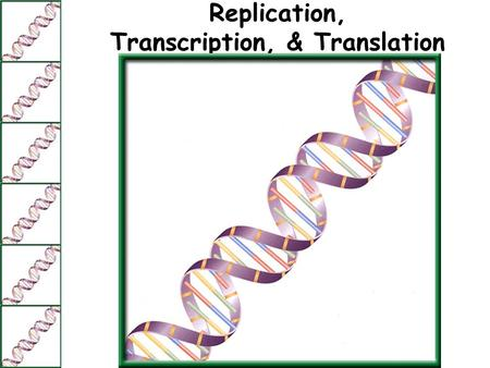 Replication, Transcription, & Translation. DNA Replication Before a cell can divide by mitosis or meiosis, it must first make a copy of its chromosomes.