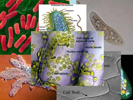 CH. 3 ~ CELLS. CELL STRUCTURE AND ORGANELLES Organisms that are Eukaryotic: Every organisms that is not bacteria: –Animals –Plants –Fungus –Protists.