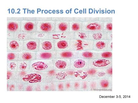 10.2 The Process of Cell Division