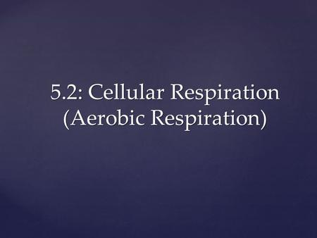 5.2: Cellular Respiration (Aerobic Respiration).  Plants—make food (sugar) through photosynthesis  Animals and other organisms—get food by eating plants.