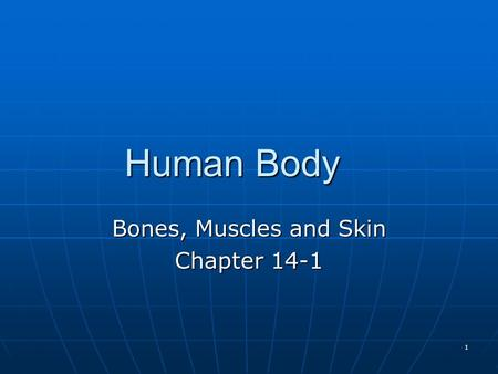 Bones, Muscles and Skin Chapter 14-1