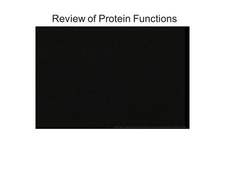 Review of Protein Functions. Protein Synthesis  Protein synthesis is divided into two phases: TRANSCRIPTION and TRANSLATION  Transcription A.RNA polymerase.