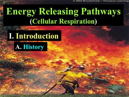 Energy Releasing Pathways (Cellular Respiration) I. Introduction A. History.