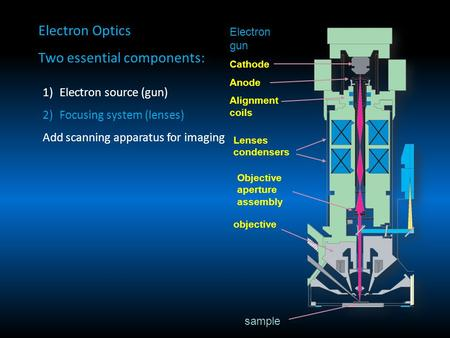 Electron Optics Two essential components: 1)Electron source (gun) 2)Focusing system (lenses) Add scanning apparatus for imaging Electron gun Cathode Anode.