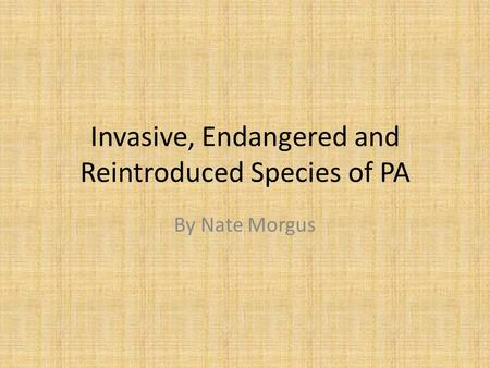 Invasive, Endangered and Reintroduced Species of PA By Nate Morgus.