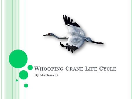 W HOOPING C RANE L IFE C YCLE By Marlena B. H ATCHING Inside the egg, the baby first breaks the air cell to breathe. Next, it pecks a small, star-shaped.