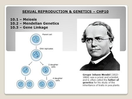 SEXUAL REPRODUCTION & GENETICS – CHP10