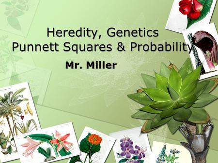 Heredity, Genetics Punnett Squares & Probability Mr. Miller.