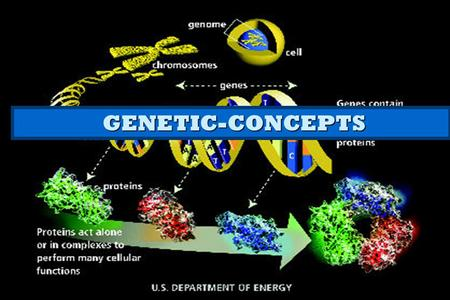 GENETIC-CONCEPTS GENETIC-CONCEPTS. 1.Genome 2.Chromosome 3.Gene 4.DNA/RNA 5.Nucleic Acid 6.Protein 7.Amino Acid.