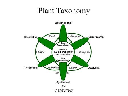 Plant Taxonomy. Taxonomic Systems Predicitivity - Ideally our systems of classification should allow us to place similar species of plants together in.