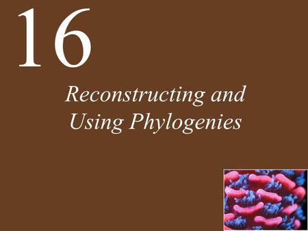 Reconstructing and Using Phylogenies 16. Concept 16.1 All of Life Is Connected through Its Evolutionary History All of life is related through a common.