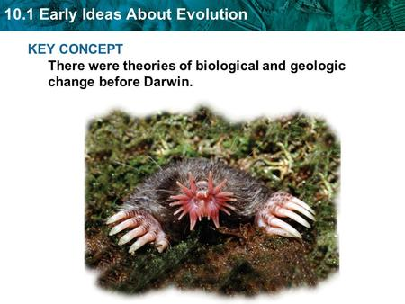 10.1 Early Ideas About Evolution KEY CONCEPT There were theories of biological and geologic change before Darwin.