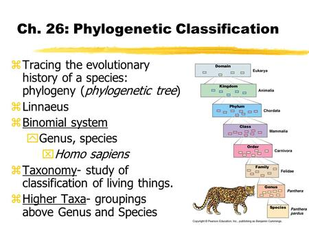 Ch. 26: Phylogenetic Classification zTracing the evolutionary history of a species: phylogeny (phylogenetic tree) zLinnaeus zBinomial system yGenus, species.