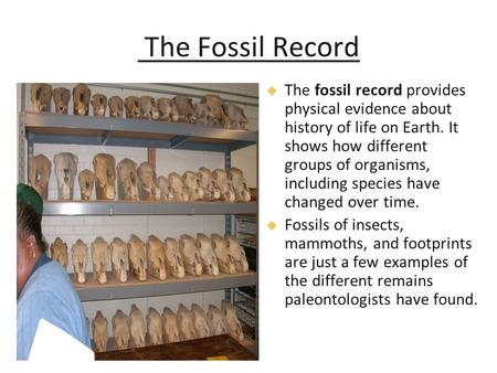 The Fossil Record   The fossil record provides physical evidence about history of life on Earth. It shows how different groups of organisms, including.