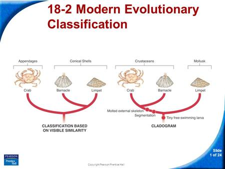 Slide 1 of 24 Copyright Pearson Prentice Hall 18-2 Modern Evolutionary Classification.